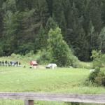 schneeberglandrallye29